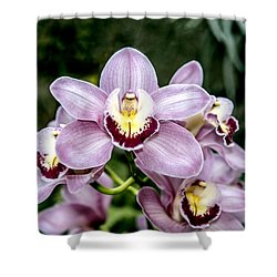 Lavender Orchid Shower Curtain