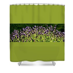 Shower Curtain featuring the photograph Lavender Pano by Jerry Sodorff