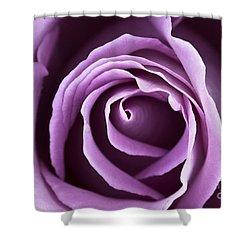 Lavender Rose Shower Curtain