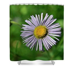 Lavender Serenity Shower Curtain