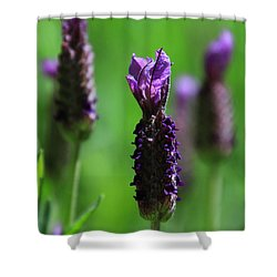 Lavender Spike Shower Curtain
