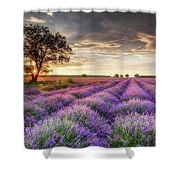 Lavender Sunrise Shower Curtain by Evgeni Dinev
