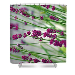 Shower Curtain featuring the photograph Lavender by Susanne Van Hulst