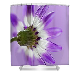 Layers Of Mauve Shower Curtain