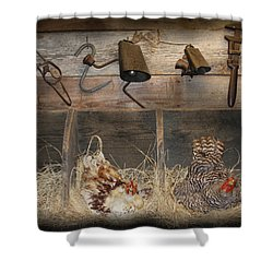 Laying Hens Shower Curtain by Kim Henderson