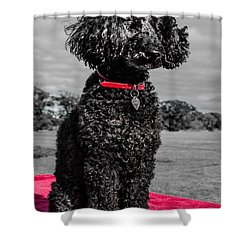 Layla Shower Curtain