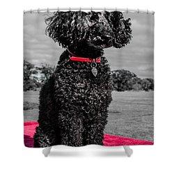 Layla Shower Curtain by Martina Fagan