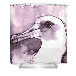 Laysan Albatross Shower Curtain