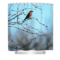 Lazuli Bunting Looks Out Shower Curtain