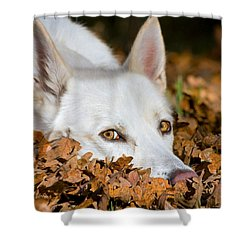 Shower Curtain featuring the photograph Lazy Autumn Day by Tyra  OBryant