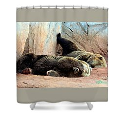 Shower Curtain featuring the photograph Lazy Bears by Sheila Brown