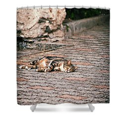 Shower Curtain featuring the photograph Lazy Cat    by Silvia Ganora