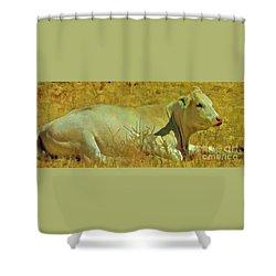 Lazy Daze Shower Curtain
