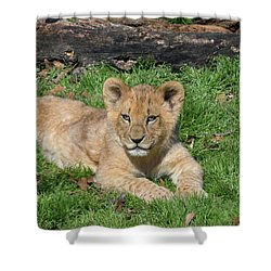 Lazy Little Leo Shower Curtain