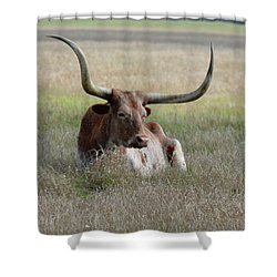 Shower Curtain featuring the photograph Lazy Longhorn by Jimmie Bartlett