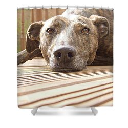 Lazy Lurcher Dog Shower Curtain