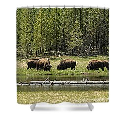 Lazy Morning Shower Curtain