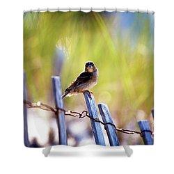 Shower Curtain featuring the photograph Lbi Beach Bird by John Rizzuto