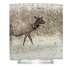 Lead Cow Shower Curtain