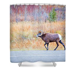 Leader Of The Herd Shower Curtain