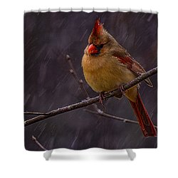 Leading Lady  Shower Curtain