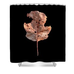 Leaf 24 Shower Curtain