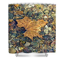 Leaf Among The Shells Shower Curtain
