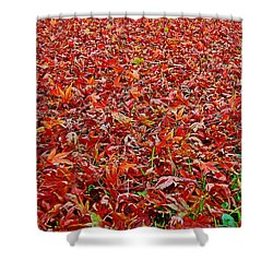 Shower Curtain featuring the photograph Leaf Carpet by Nareeta Martin