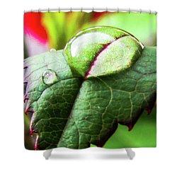 Leaf Shower Curtain by Cesar Vieira