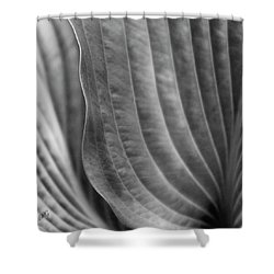 Leaf - Edgy Path Shower Curtain by Ben and Raisa Gertsberg