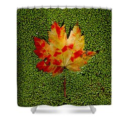 Leaf Floating On Duckweed Shower Curtain