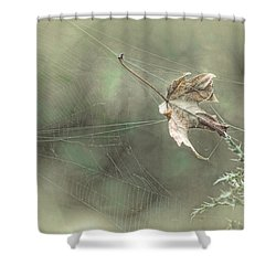 Leaf In Spiderweb Shower Curtain