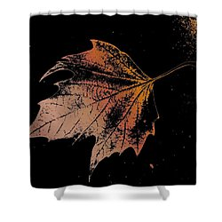 Leaf On Bricks Shower Curtain by Tim Allen