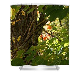 Leaf Peeping In Red Shower Curtain