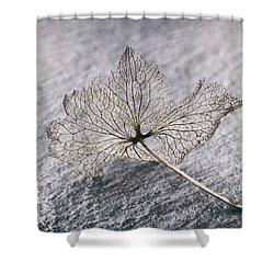 Leaf Skeleton Shower Curtain by Karen Stahlros