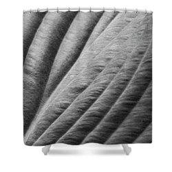 Leaf - Softness Shower Curtain by Ben and Raisa Gertsberg