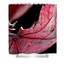 Leaf Study I Shower Curtain