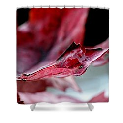 Leaf Study II Shower Curtain