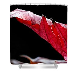 Leaf Study IIi Shower Curtain