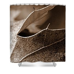 Leaf Study In Sepia II Shower Curtain
