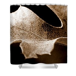 Leaf Study In Sepia Shower Curtain by Lauren Radke