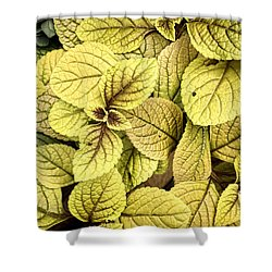 Leaf Study - Nature Photography Shower Curtain