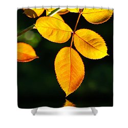 Leafs Over Water Shower Curtain by Carlos Caetano
