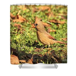 Leafy Cardinal Shower Curtain
