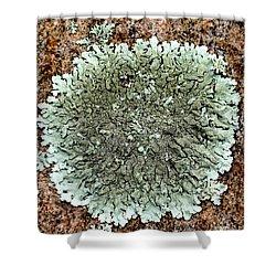 Leafy Lichen Shower Curtain