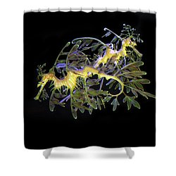 Leafy Sea Dragons Shower Curtain by Anthony Jones