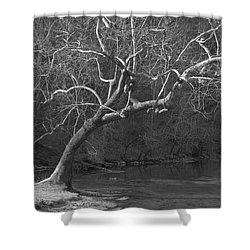 Shower Curtain featuring the photograph Leaning Tree - Black And White by Jane Eleanor Nicholas