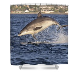 Jolly Jumper - Bottlenose Dolphin #40 Shower Curtain