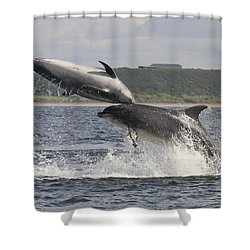 Leaping Bottlenose Dolphins - Scotland  #38 Shower Curtain