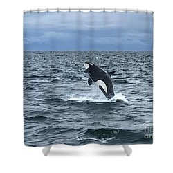 Leaping Orca Shower Curtain